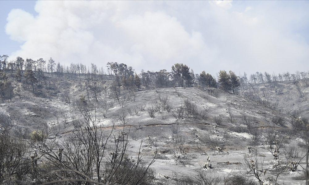 Yunanistan'daki doğal felaket: Orman yangınları doğayı ve insanı birlikte vurdu
